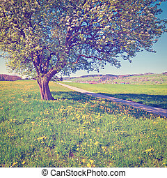 Meadows - Solitary Flowering Tree Surrounded by Sloping...