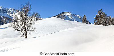 Solitary maple tree in deep snow. Mountains winter landscape...
