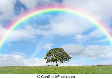 Solitary Oak and Rainbow - Oak tree in summer standing alone...