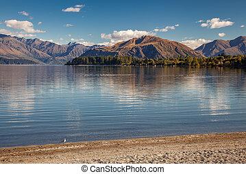 Solitary seagull on the shoreline of Lake Wanaka