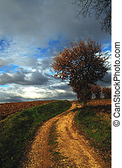 Solitary tree - A BEAUTIFUL COUNTRY PATH IN TUSCANY