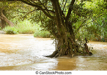 Solitary tree flooded in a fast flowing stream