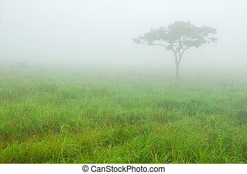Solitary tree in morning fog in the meadow