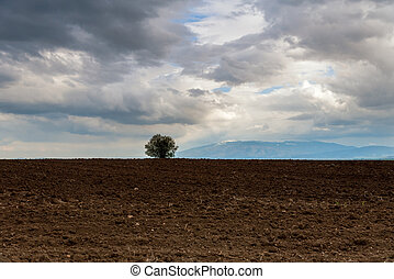 Solitary tree on a hill with mountains in the background