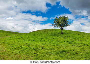 Solitary tree on a top of a green hill