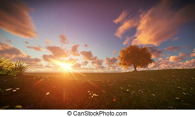 Solitary tree on green meadow, time lapse sunrise