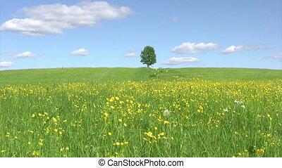 Solitary tree, summer landscape