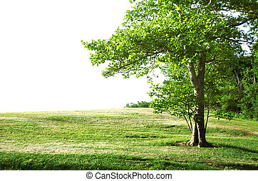 summer landscape - solitary tree with white copy space