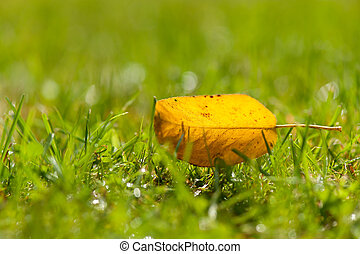 Solitary vivd yellow autumn leaf backlit by the sun on a lush green lawn with shallow dof and copyspace