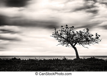 A lone tree looking the sea