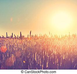 solljus, field., under, lantligt landskap, lysande