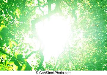 solljus, lysande, genom, träd