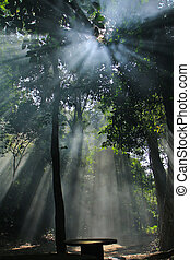 solljus, natur
