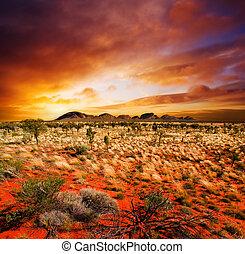 solnedgång, öken, skönhet