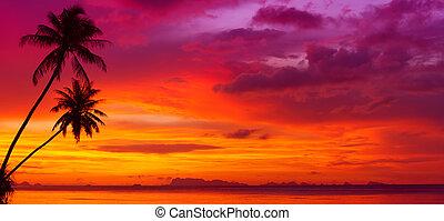 solnedgång, över, den, ocean, med, tropisk, palmträdar,...