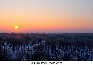 solnedgång, över, den, vinter, skog