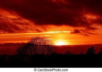 solnedgång, över, vinter, skog
