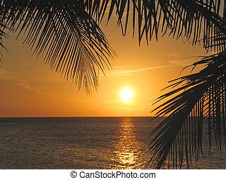 solnedgång, genom, den, palmträdar, över, den, caraibe, hav,...