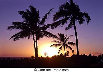 solnedgång, hawaiian