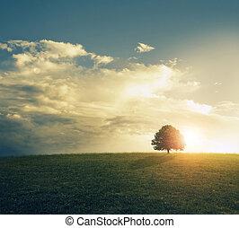 solnedgång, in, gräsbevuxen, field.