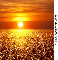 solnedgång, landskap