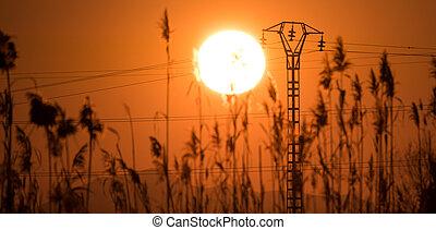 solnedgång, med, gräs, och, elektrisk, torn