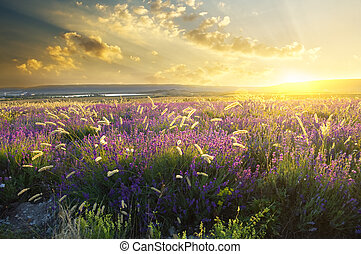 solnedgång, på, sommar, fjäll, äng
