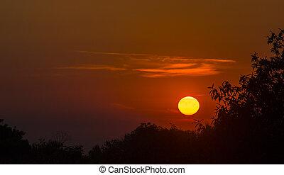 solnedgång, silhuett, träd