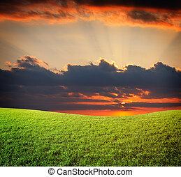 solnedgång, sol, och, fält, av, grön, frisk, gräs, under,...