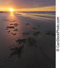 solnedgång, strand