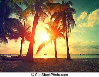 solnedgång strand, med, palmträdar, och, vacker, sky., paradis, scen, av, karibisk, ö