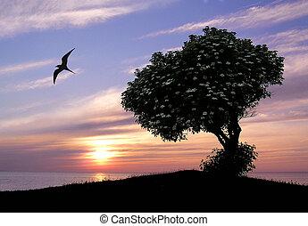 solnedgång, träd, lugn