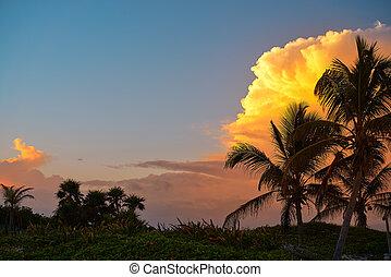 solnedgang himmel, kokosnød håndflade, træer, ind, karibisk