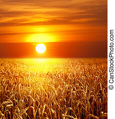 solnedgang, landskab