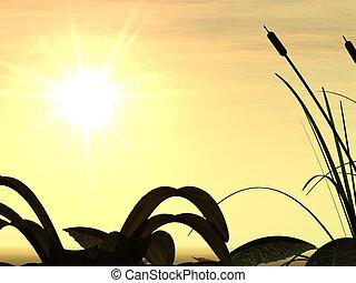 solnedgang, og, græs