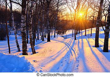 solnedgang, park, vinter