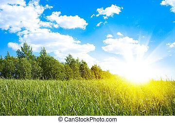 solnedgang, sol, og, felt, i, grønne, frisk, græs