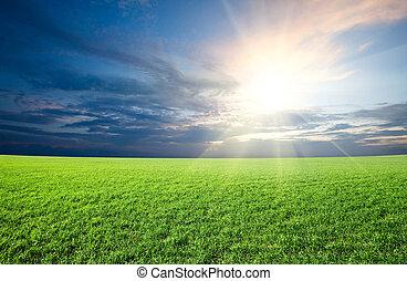 solnedgang, sol, og, felt, i, grønne, frisk, græs, under, blå himmel