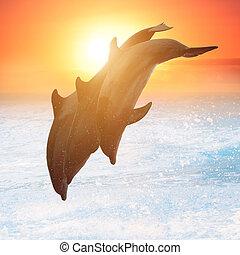 solnedgang, springe, gruppe, delfiner