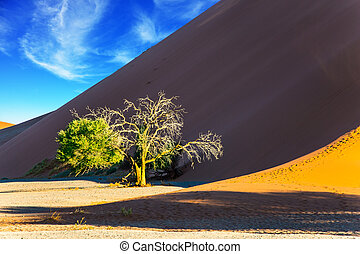 solo, árbol, en, el, desierto de namib