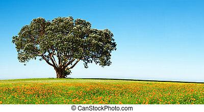 solo, árbol, en, el, florecer, campo
