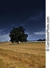 solo, árbol, en, el, pradera