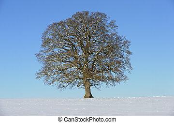 solo, árbol, en, invierno
