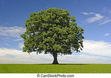 solo, árbol, en, primavera