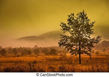 solo, árbol, en, un, pradera