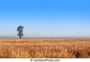 solo, árbol
