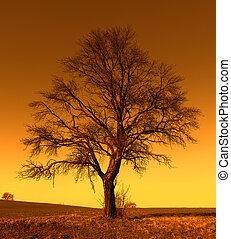 solo, árbol grande, en, pradera, en, ocaso