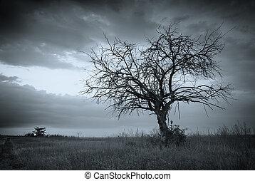 solo, árbol., muerto
