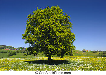 solo, árbol, pradera, primavera