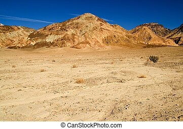 solo, arbusto, en, el, desierto